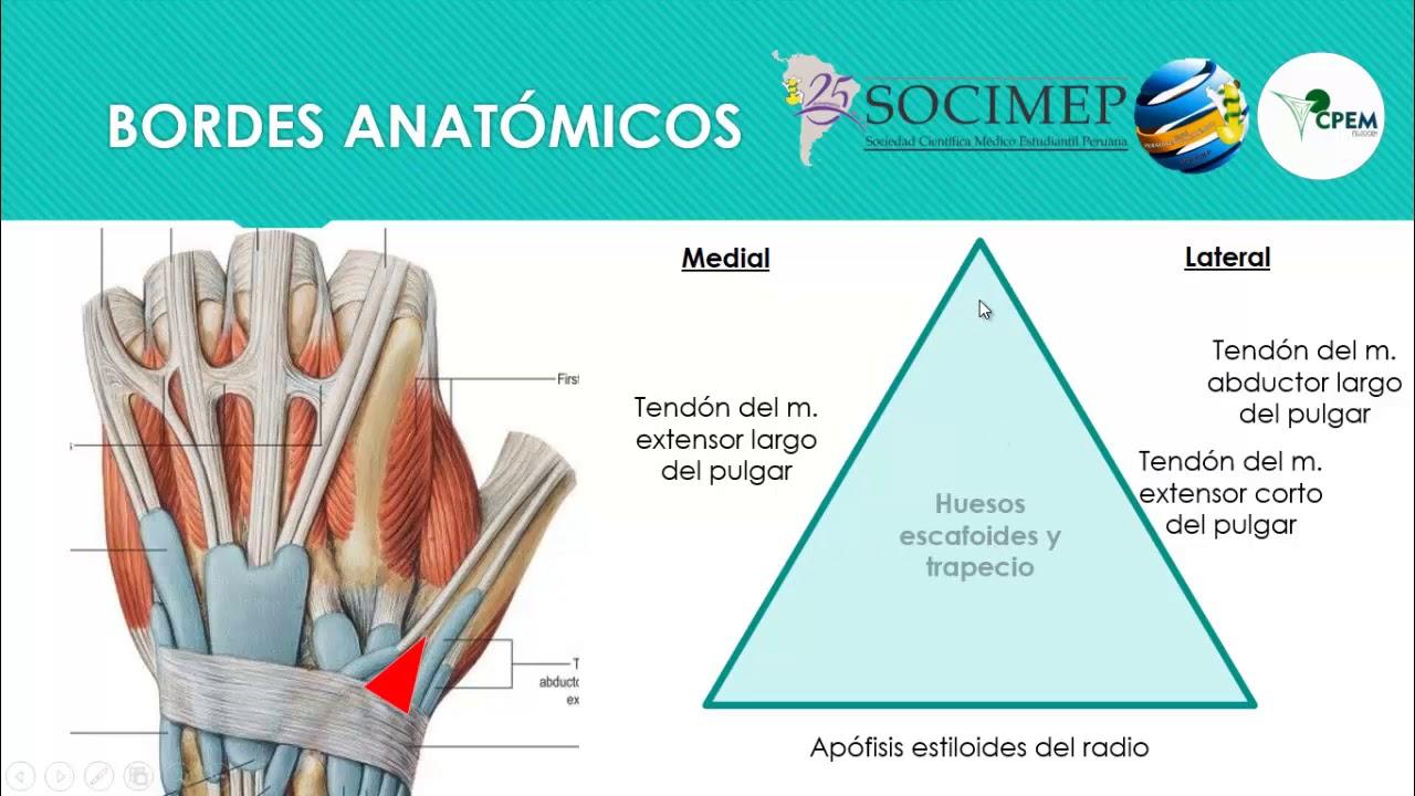 Tabaquera Anatómica - YouTube