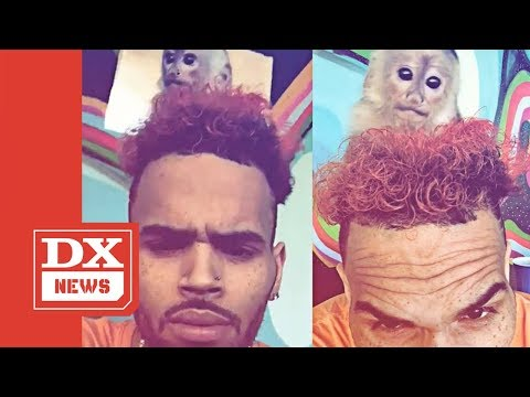 Chris Brown Facing 2 Criminal Charges For Exotic Pet Monkey Mp3