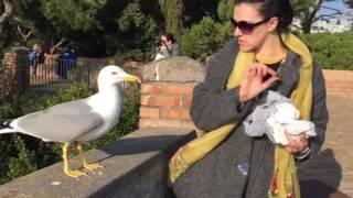 Ужасы в Италии. Сихам кормит чаек. Kateryna Siham with fear feeds seagulls in Italy.
