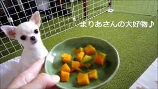 ブログです↓ http://plaza.rakuten.co.jp/maririn05/