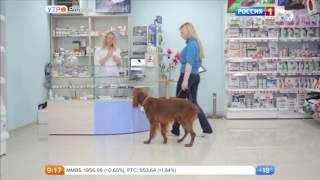 """Страхование ответственности владельцев собак только в клиниках """"ВЕГА"""""""