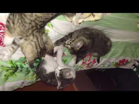 Download 我家貓咪在打架