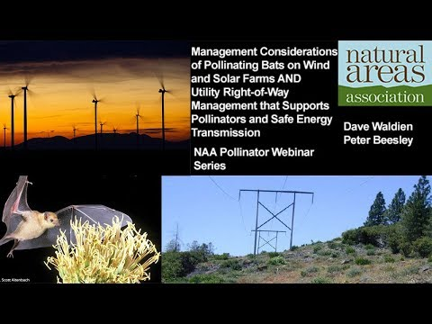 Mngmnt of Pollinating Bats on Wind/Solar Farms & Utility Right of Way Mngmnt Supporting Pollinators