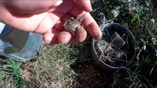¡¡Las ranas invaden el terrario de mis tortugas!!😱🐸😱 thumbnail