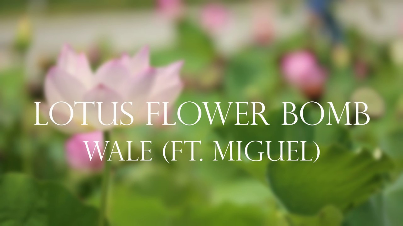 Wale Feat Miguel Lotus Flower Bomb Remix Youtube