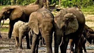 Сказка про слона, который упал в яму.