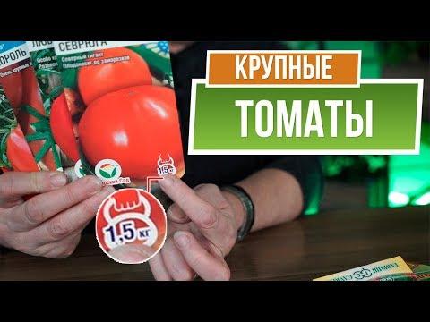 Самые большие помидоры 🍅 1,5 КГ Помидор 🍅 Крупные сорта томатов | садоводам | помидоры | томатов | помидор | крупные | большие | томаты | советы | огород | гарден