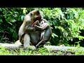 Why Cruel Monkey Do Like This On Cute Baby ST1264 Mono Monkey