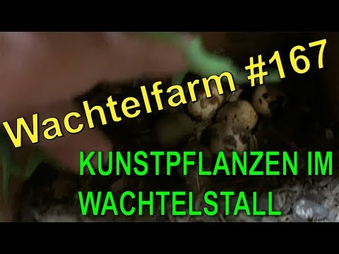 Kunstpflanzen im Wachtelstall als Verstecke - Das ist das Ergebnis - Wachtelfarm #167