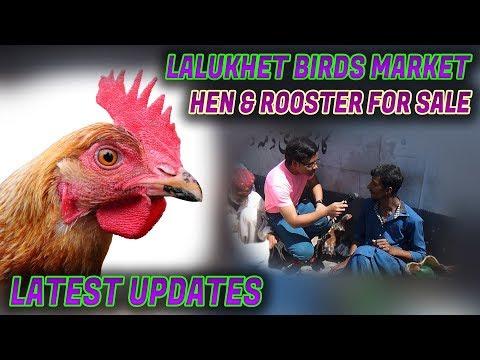 Lalukhet Birds Market 11- 3- 2018  Hen & Rooster for sale Jamshed Asmi Informative Channel