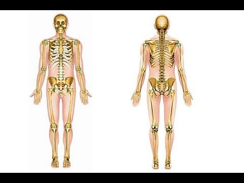 Comment m moriser le squelette humain youtube - Sensation de froid interieur du corps ...