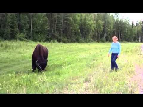 Senior Citizen Alaskan Vacation