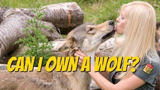 CZECHOSLOVAKIAN WOLFDOG - Should you get one?