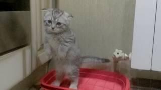 Кот какает стоя!