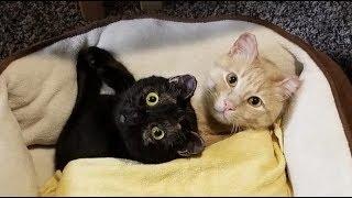 Влюблённых кота и кошечку настиг пожар, но они выжили и даже родили котят