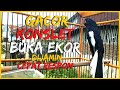 Kacer Gacor Konslet Buka Ekor Muntahin Isian Mewah Cocok Buat Pancingan Yang Kurang Ngotot Gacor  Mp3 - Mp4 Download