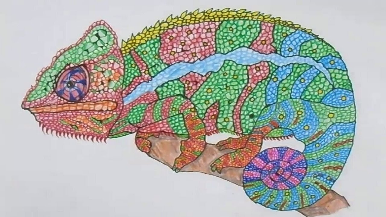 Colorful Chameleon Drawing | www.pixshark.com - Images ...