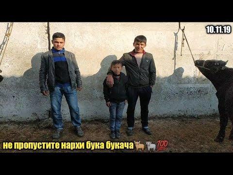 мол бозори регар пахтаобод нархҳо арзон шуд ё не 10 ноября