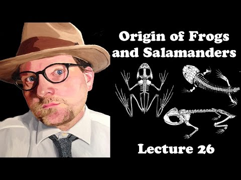 Lecture 26 The Origin Of Frogs And Salamanders