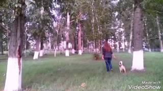 Я и моя собака# клип#
