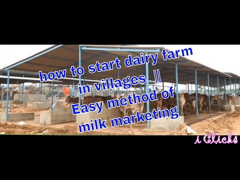 how to start dairy farm in villages  || Easy method of milk marketing