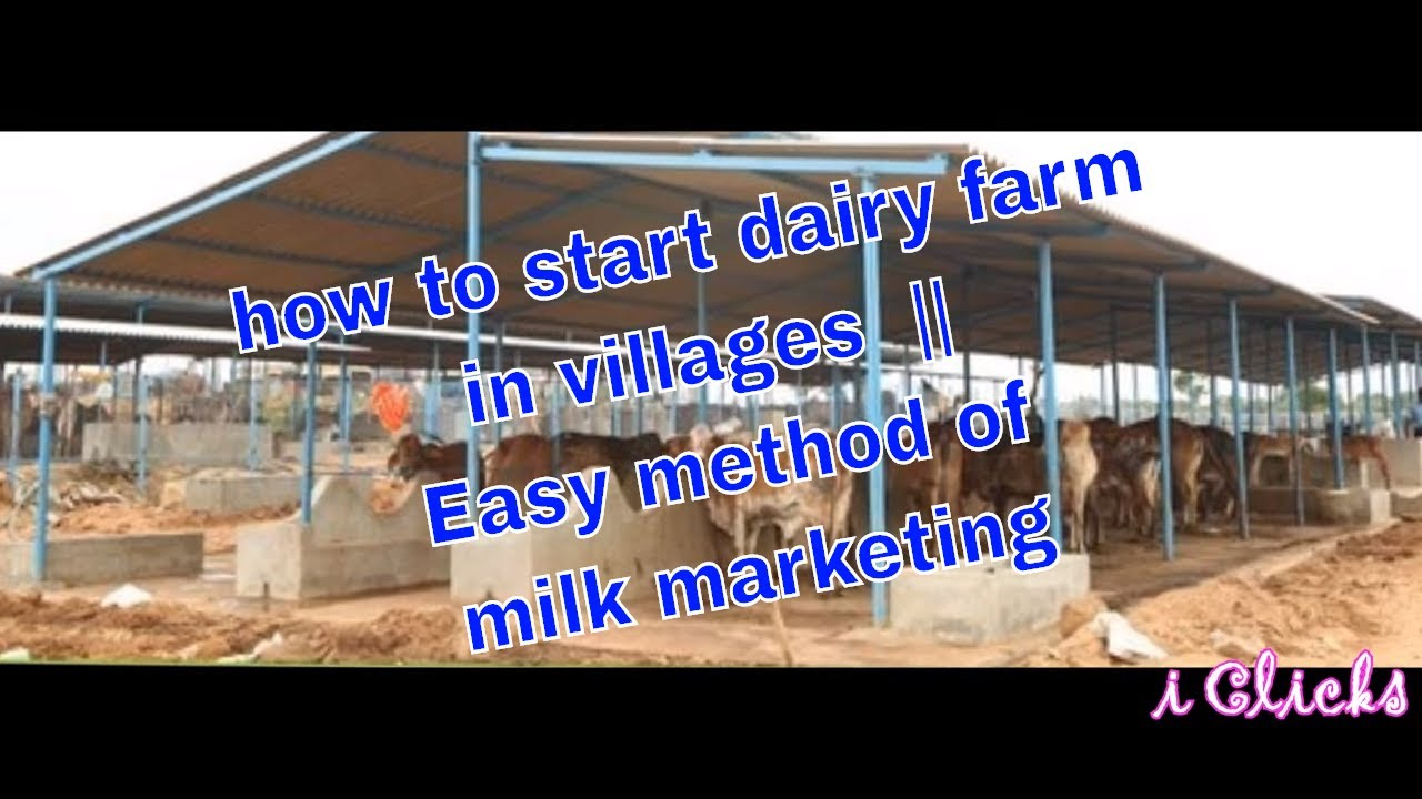 How to start dairy farm in villages easy method of milk marketing