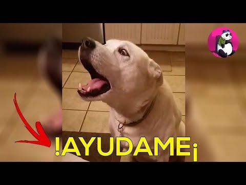 8 ANIMALES QUE PUDIERON HABLAR QUE SI NO HUBIERAN GRABADO NADIE LO HUBIERA CREIDO