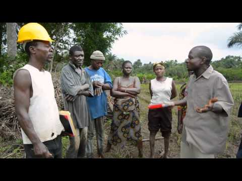 WAVA, LLC  West African Ventures in Agriculture Liberia