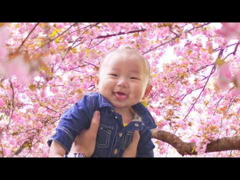 Cherry Blossoms @ Brooklyn Botanical Garden, NY