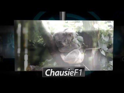 видео: Гайд паладин panzar