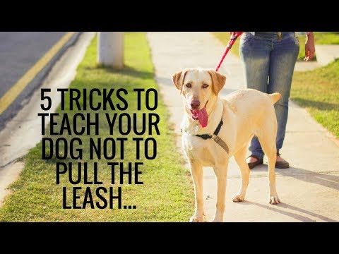 5 Tricks To Teach Your Dog Not To Pull The Leash
