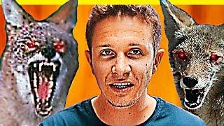 Man VS Coyotes