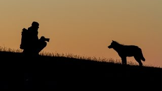 Photographing the Snow Wolf family - Snow Wolf Family and Me - BBC Two