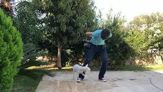 """Трюковая дрессировка :: как научить собаку ходить """"восьмерки"""" между ног"""