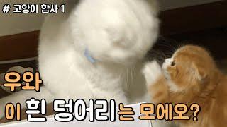 (ENG) 고양이 합사 1편 : 무지와 막지의 숨막히는 첫 만남 !!!!!!