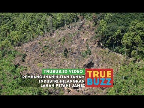 Pembangunan Hutan Tanam Industri Hilangkan Lahan Petani Jambi Youtube