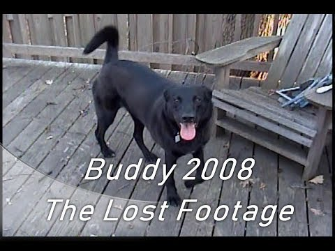Buddy 2008 - The Lost Footage