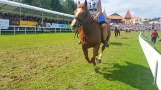 Marché Concours 2017: Pferderennen ohne Sattel