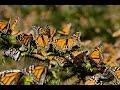 El Santuario de mariposas del Estado de México