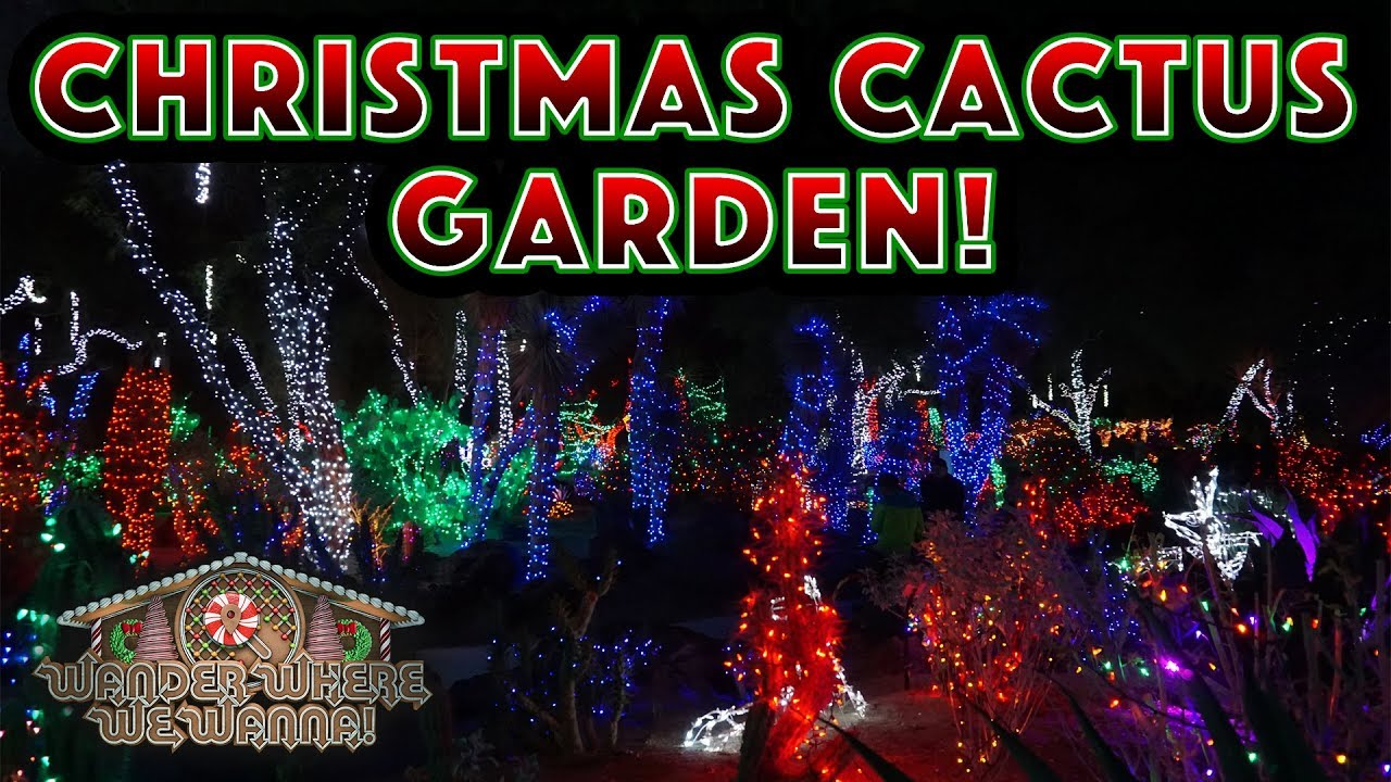 christmas lights in the cactus garden at ethel m