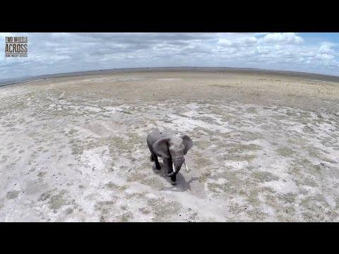 Kenya Wildlife, like never seen before! Drone footage (short version)