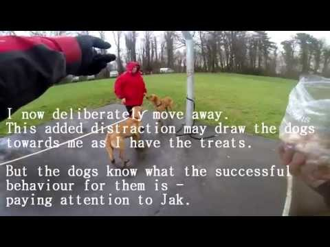 Dog training - manage the environment to achieve the behaviour you want.