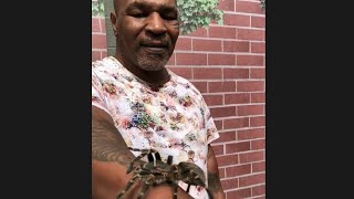 MIKE TYSON SCARED OF SPIDER FROM THE Real Tarzan