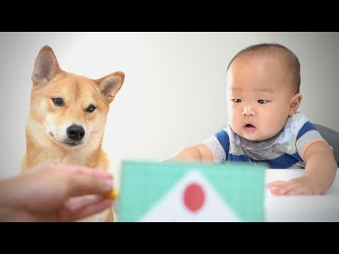Baby and Dog React to JACK-IN-THE-BOX! [Ep. 2]