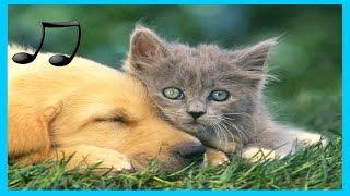 Musik Entspannende für Hunde ,Katzen ,Musik zum Schlafen Tiere 9 #GuteLauneMusik
