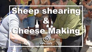 Koures, Sheep shearing & Cretan Cheese Making