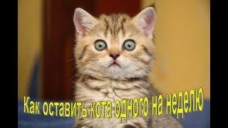 Как оставить кота одного дома