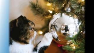 Коты, еноты и новогодние елки. Ох и достается же елочкам от хвостатых))