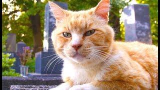 アニマルプラネット「2月は、にゃんと!猫の月」特集を展開