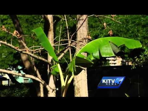 Honolulu Zoo debuts new growing exhibit